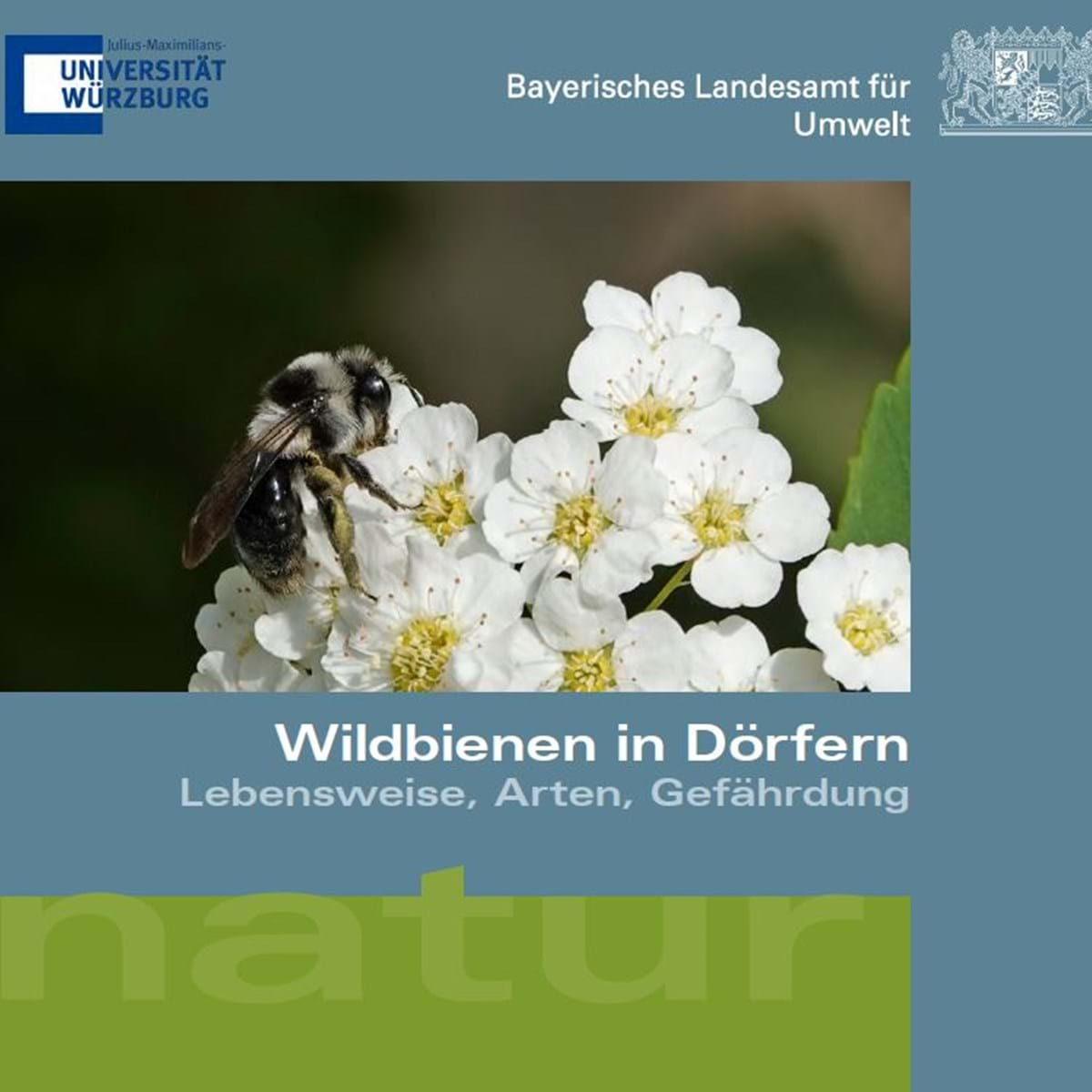 Neuigkeiten Wildbienendörfer